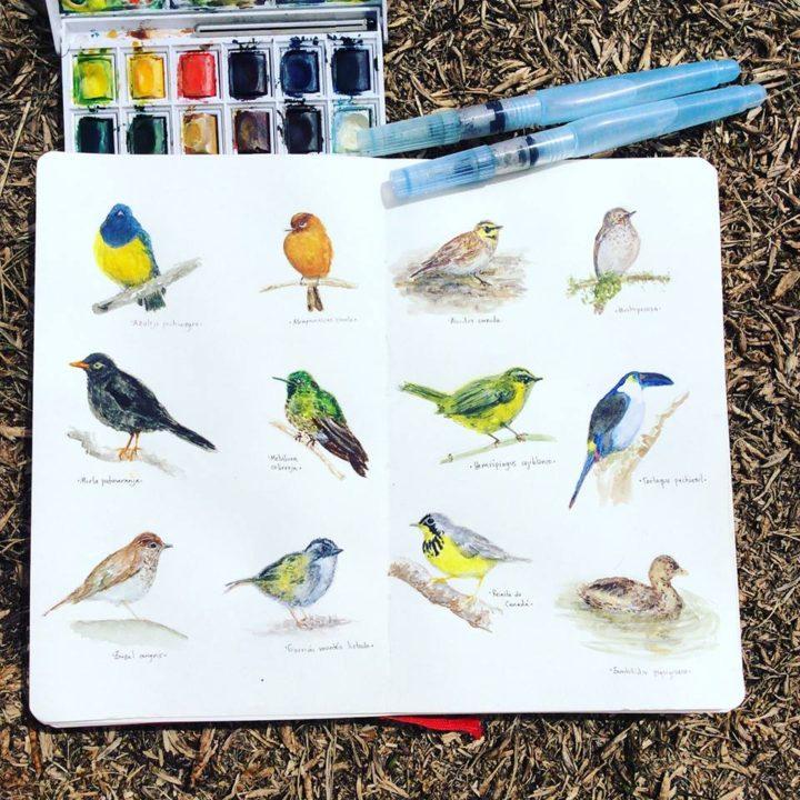 Aves de Bogotá y la Sabana