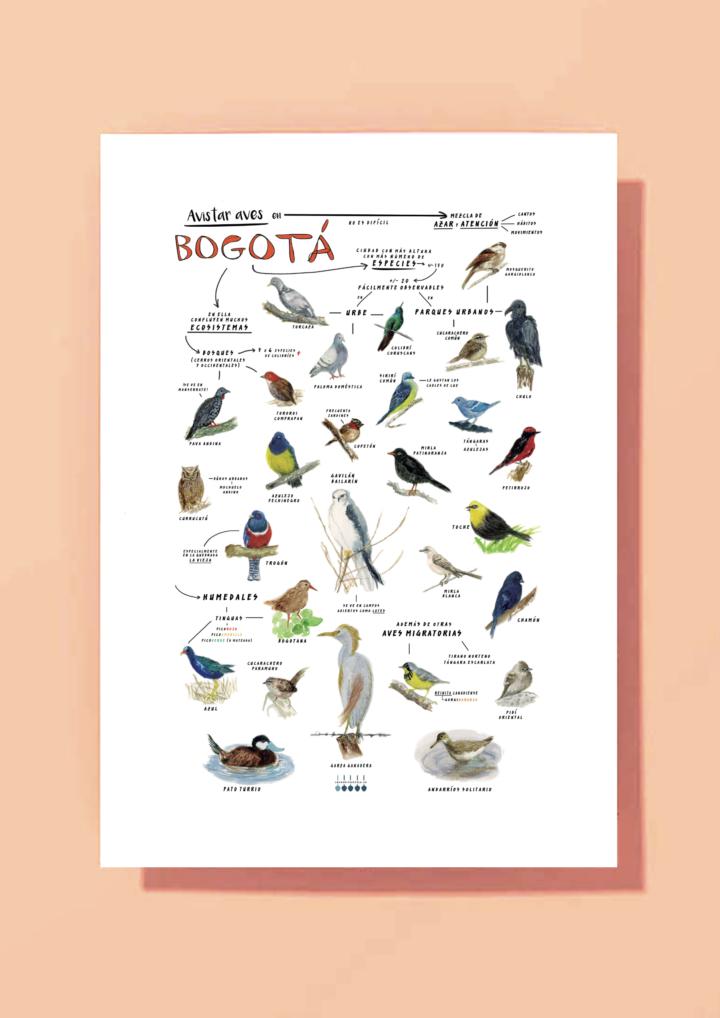 """""""Aves de Bogotá y La Sabana"""" – reproducción gliclée"""