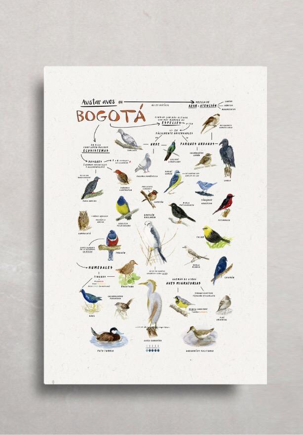 """Póster """"Aves de Bogotá y La Sabana"""""""